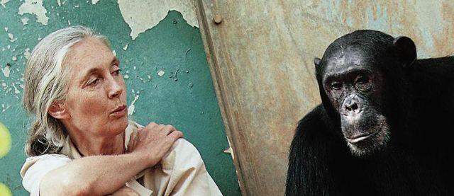Serija Šimpanze i Džejn Gudol