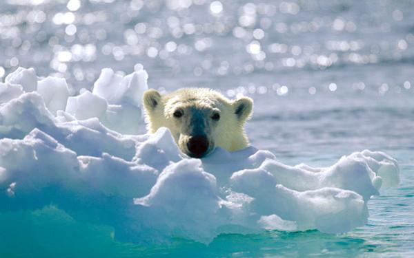 Film Arktička priča (Arctic Tale)