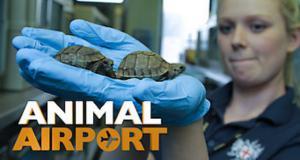 Životinje na aerodromu (Animal Airport)